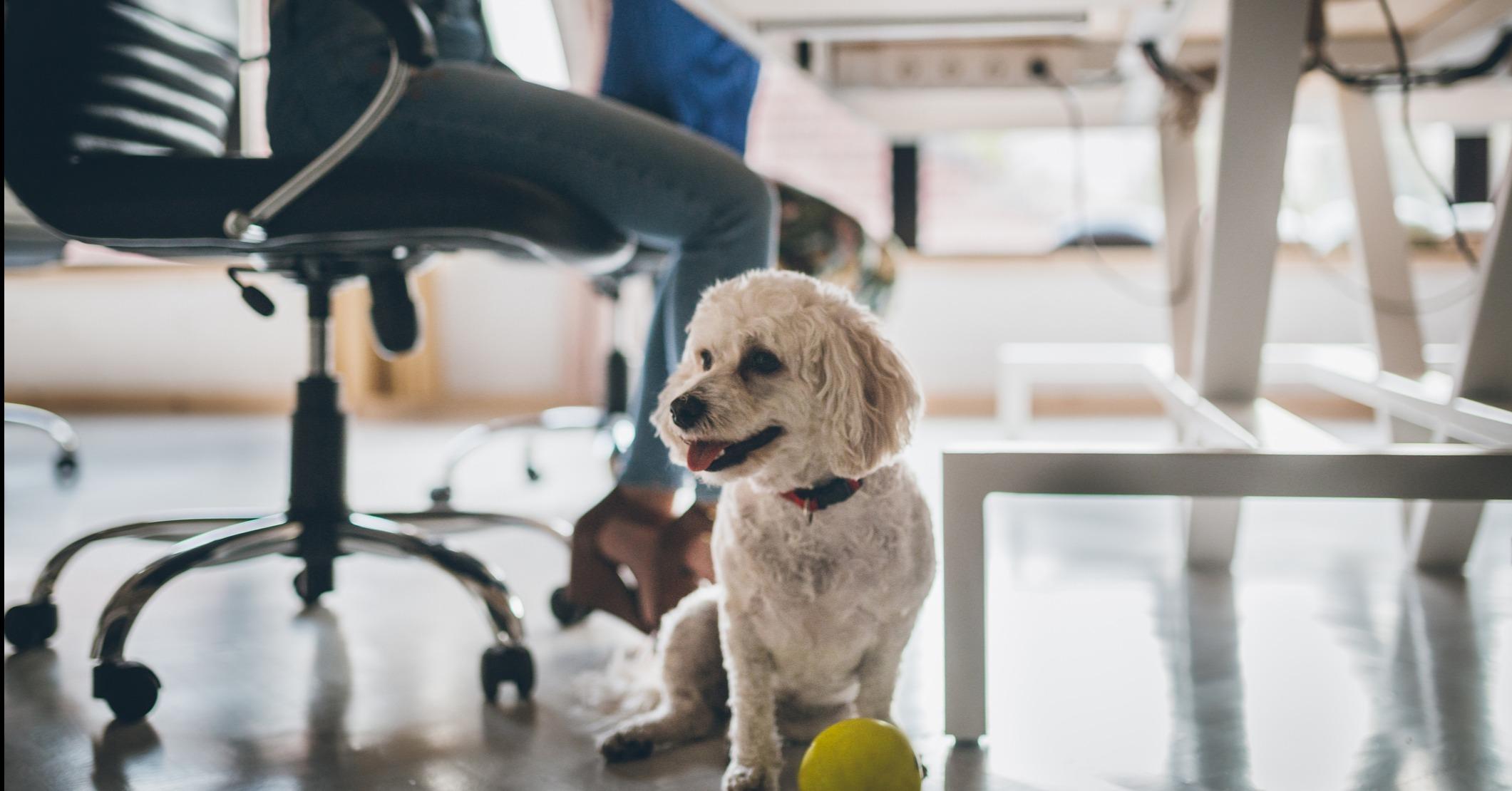 stotte medarbeidere hund ordning